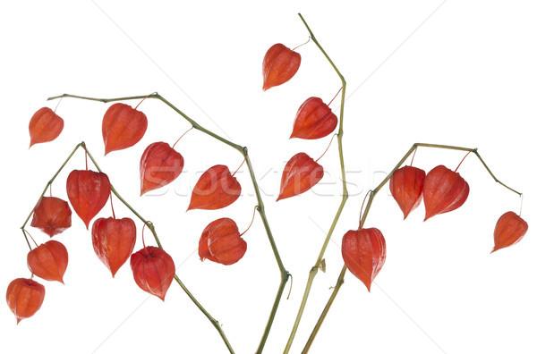Piros szívek szett dobozok kínai lámpás Stock fotó © vavlt