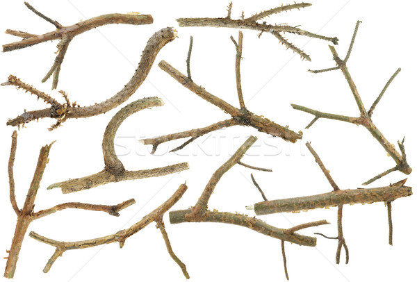 Pine branches without needles set isolated Stock photo © vavlt