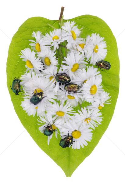 Bugs marguerites vert émeraude fleurs coeur Photo stock © vavlt