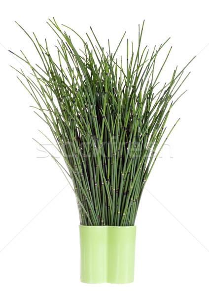 dark green forest herbs Stock photo © vavlt