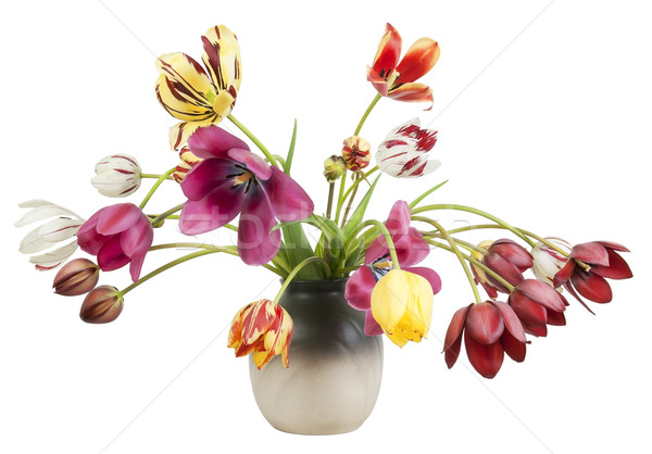 Striped faded tulips Stock photo © vavlt