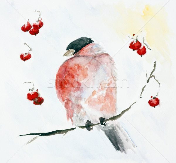 Frozen red bird Bullfinch and rowan berries Stock photo © vavlt