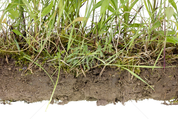 Bodem geïsoleerd fragment echt wild gras Stockfoto © vavlt
