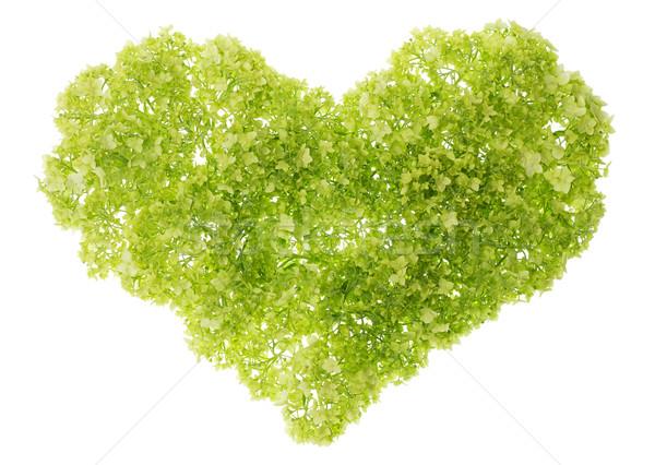Gentle green heart Stock photo © vavlt
