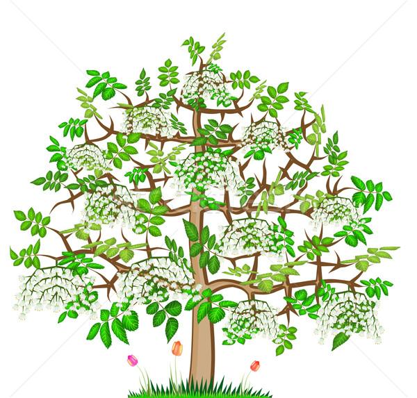 ash lonely blossom  spring tree  Stock photo © vavlt