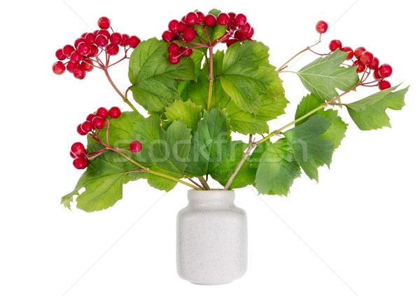 minimalistic  bouquet- Russian viburnum berries on branches Stock photo © vavlt