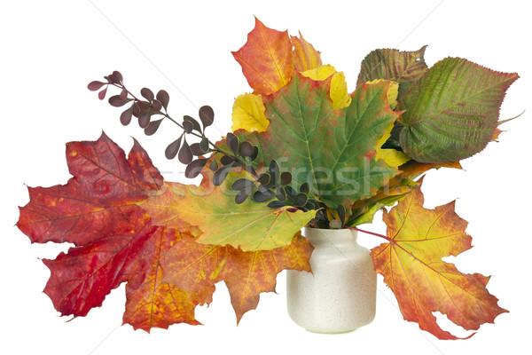 minimalistic  bouquet  - autumn maple leaves Stock photo © vavlt