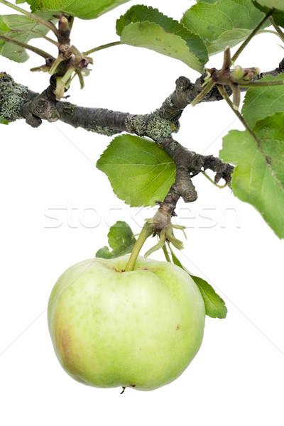 Eenzaam groene ecologisch appel tak geïsoleerd Stockfoto © vavlt