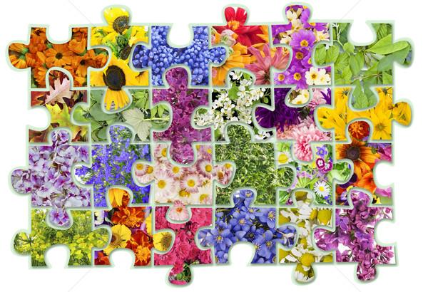 цветочный аннотация коллаж цветы растений фон Сток-фото © vavlt