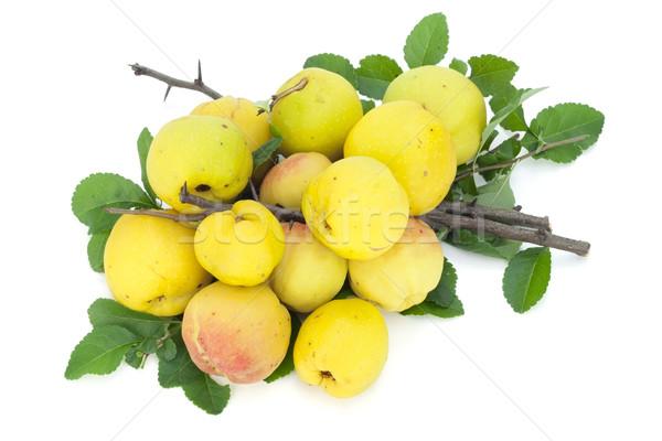 желтый плодов листьев айва зеленые листья Сток-фото © vavlt