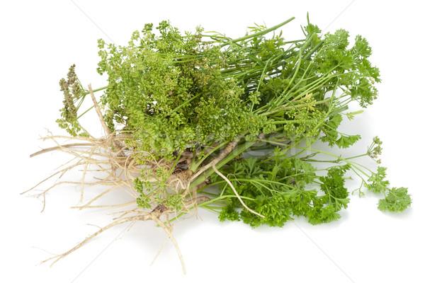 Igazi vidéki zöld fűszer petrezselyem levelek Stock fotó © vavlt