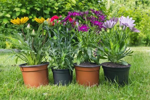Palánták egzotikus virágok most idő föld Stock fotó © vavlt