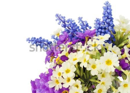 Bush fiori spot primo blu selvatico Foto d'archivio © vavlt