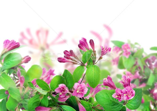 Pink collage postcard Stock photo © vavlt