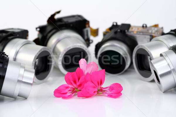 Flower of a geranium and objectives of compact cameras Stock photo © vavlt