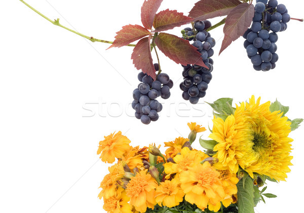 Foto d'archivio: Fiori · gialli · cartolina · isolato · bianco · fiori