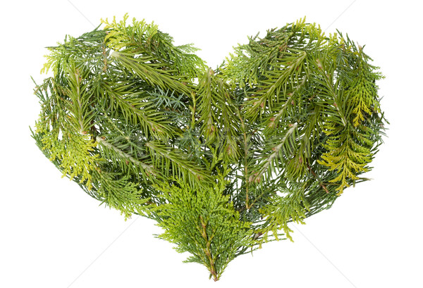 Evergreen  coniferous christmas trees heart isolated Stock photo © vavlt