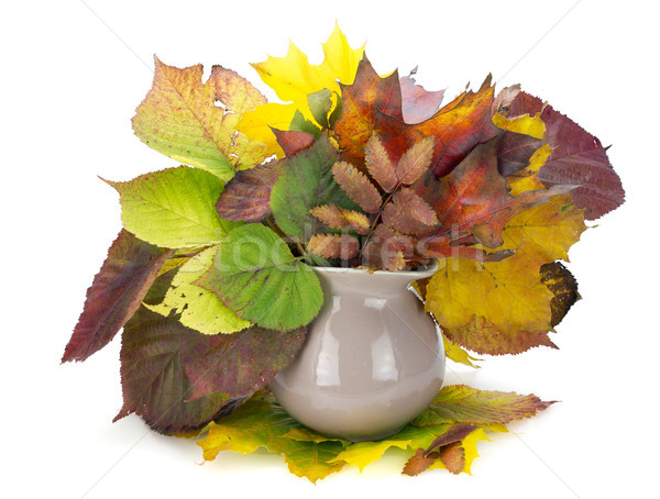 autumn leaves bouquet in jug Stock photo © vavlt