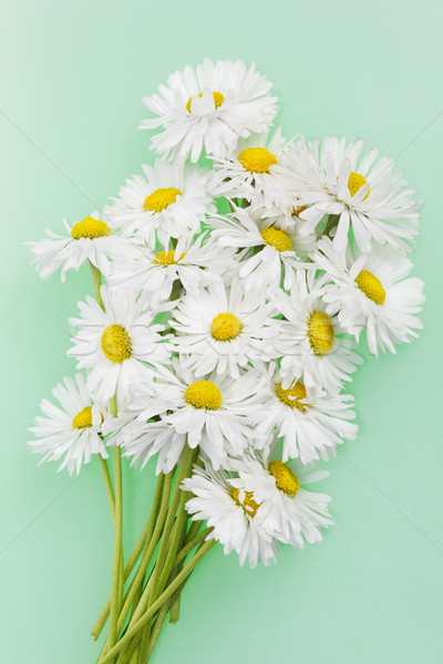 Delicate fragile daisies  Stock photo © vavlt