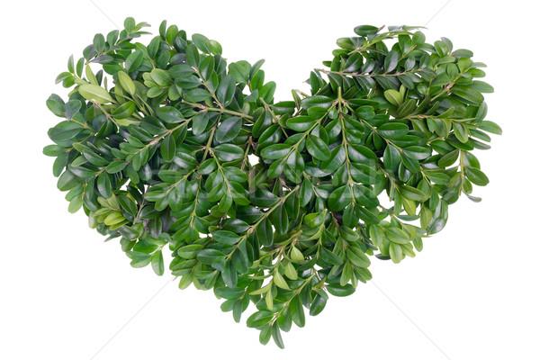 Christmas green heart concept Stock photo © vavlt