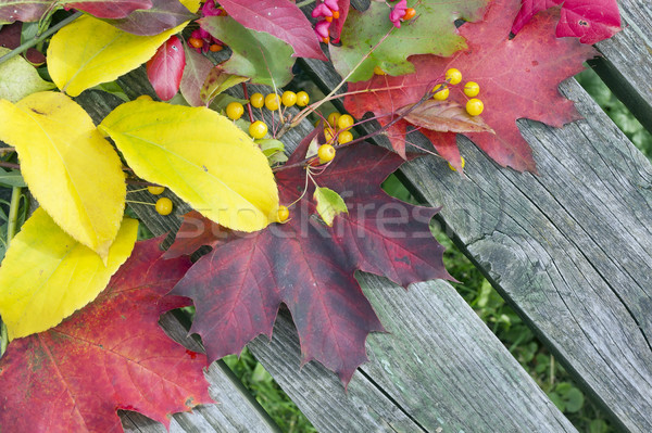 Background from autumn leaves and fruits Stock photo © vavlt