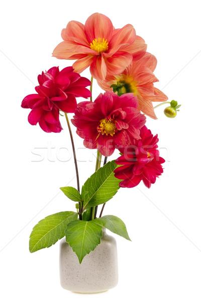 Stock photo: minimalistic  bouquet  - mini dahlia red flowers