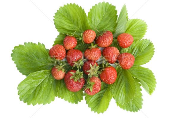 Medallion from wild strawberry Stock photo © vavlt