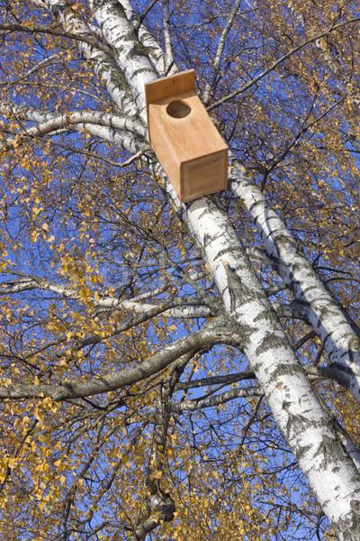 Starling  Birdhouse Stock photo © vavlt