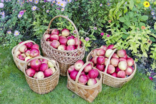 Geel zoete appels Rood weide bloemen Stockfoto © vavlt