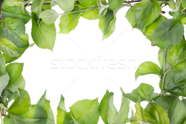 Apple tree spring leaves abstract frame Stock photo © vavlt