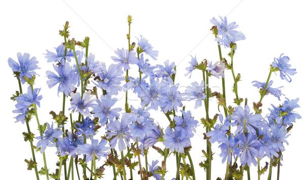 Border from field wild cornflowers Stock photo © vavlt
