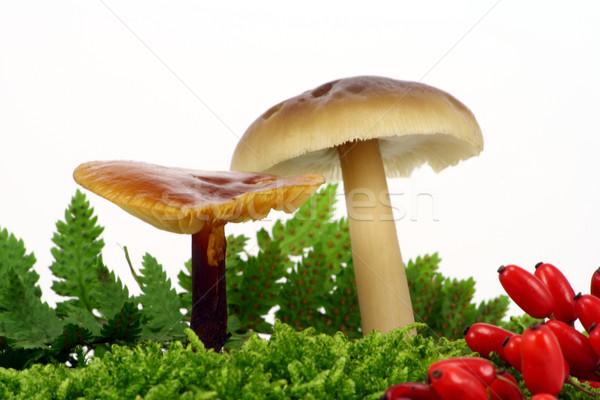 Decorative mushrooms Stock photo © vavlt