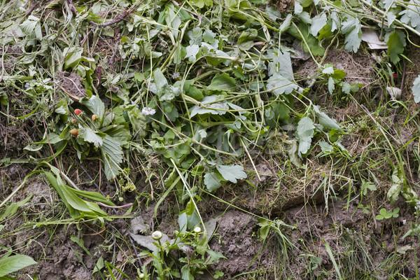Rot gras vuilnis bodem hoop tuin Stockfoto © vavlt