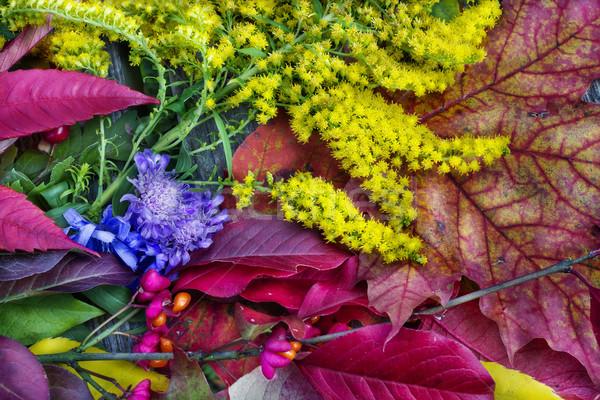 Najaar kleuren bladeren vruchten textuur bos Stockfoto © vavlt