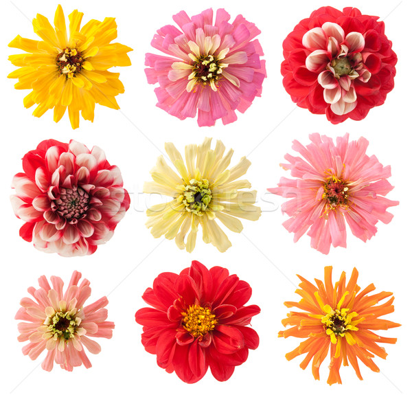 Favoriet tuin bloemen ingesteld zomer europese Stockfoto © vavlt