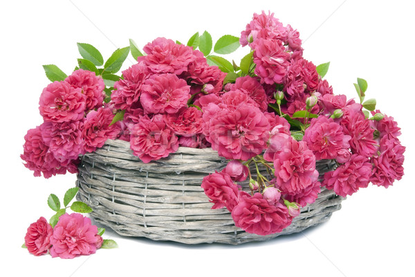 Many pink roses in basket Stock photo © vavlt