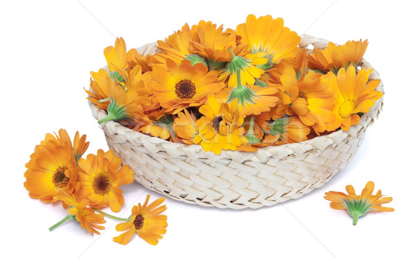 medicinal calendula in basket Stock photo © vavlt