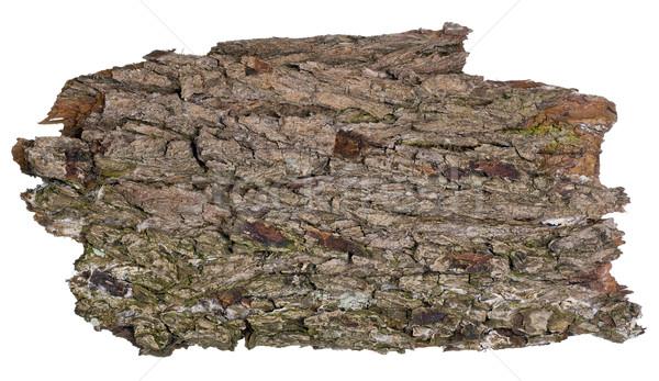 Forest oak grunge isolated banner Stock photo © vavlt