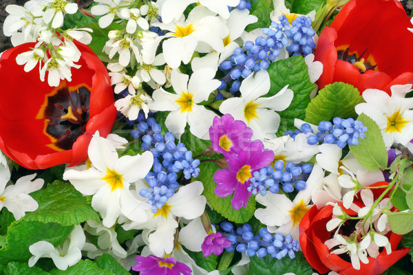 Springs flowers colors  Stock photo © vavlt