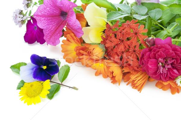 July flowers  Stock photo © vavlt