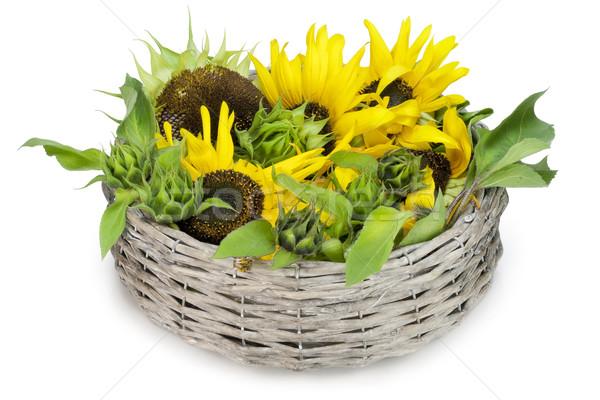 Girasol mentiras cesta verano amarillo girasoles Foto stock © vavlt