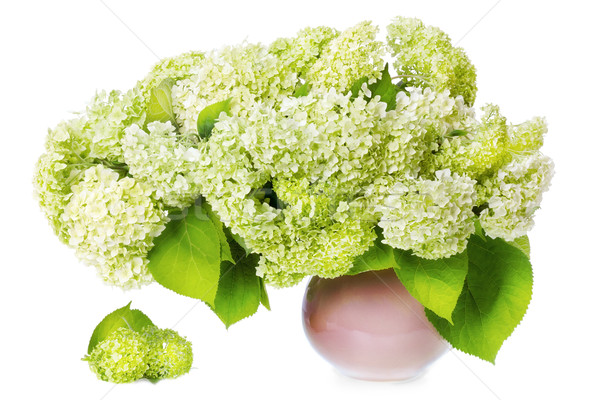 Luxuriante bouquet blanche vert fleurs Photo stock © vavlt