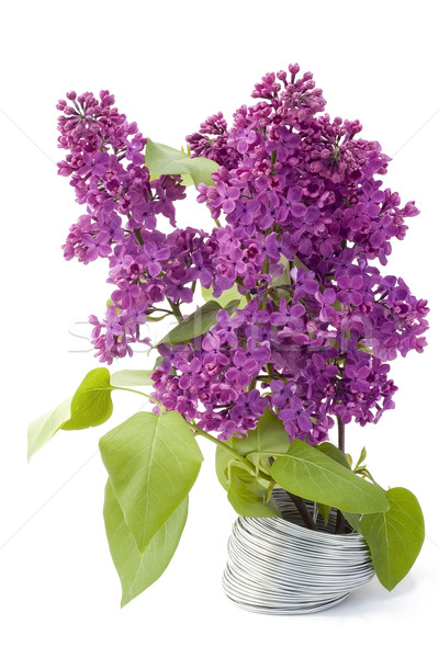 Branch of a lilac and wire Stock photo © vavlt