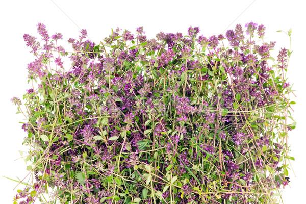 Fiore erbe origano medici foresta selvatico Foto d'archivio © vavlt