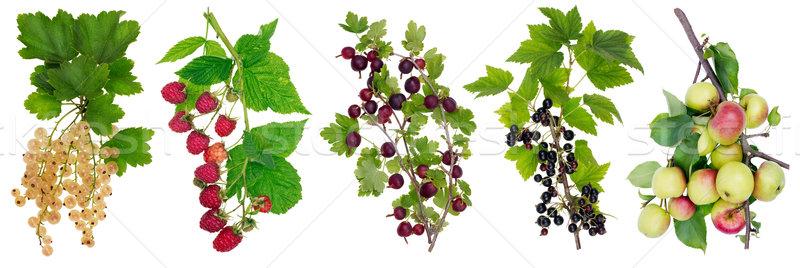 Vízszintes panel gyümölcsök kollázs izolált ágak Stock fotó © vavlt