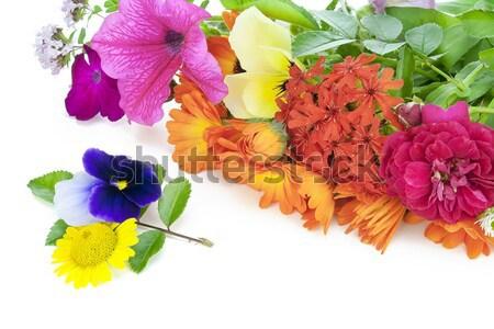 Regalo amato fiori finestra isolato Foto d'archivio © vavlt