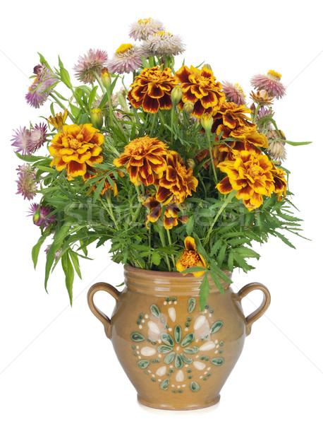 French Marigold in jug Stock photo © vavlt