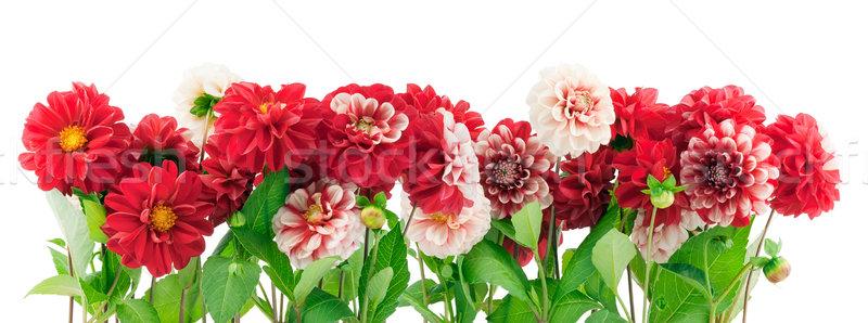 Kırmızı bitkiler sınır kırmızı çiçekler bahçe avrupa Stok fotoğraf © vavlt