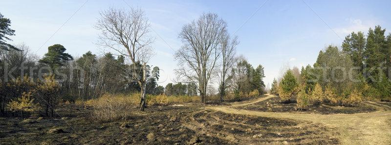 Bos panoramisch voorjaar landschap vernietiging natuur Stockfoto © vavlt