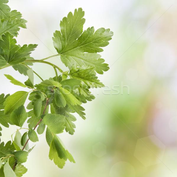 листьев весны зеленые листья аннотация природы завода Сток-фото © vavlt